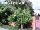 Продаю дом в с. Петрушино