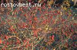 Участок. с/т Темерник.7км. от Ростова